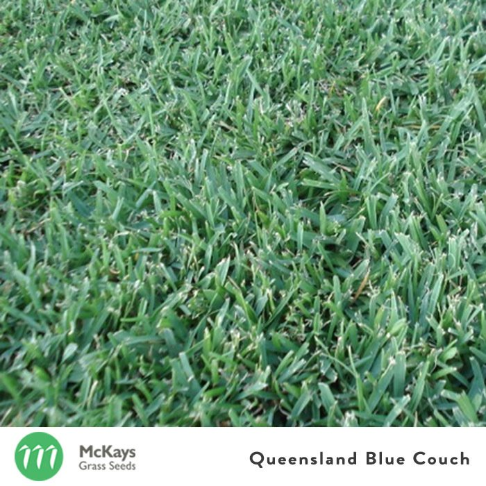 Queensland Blue Couch Seed