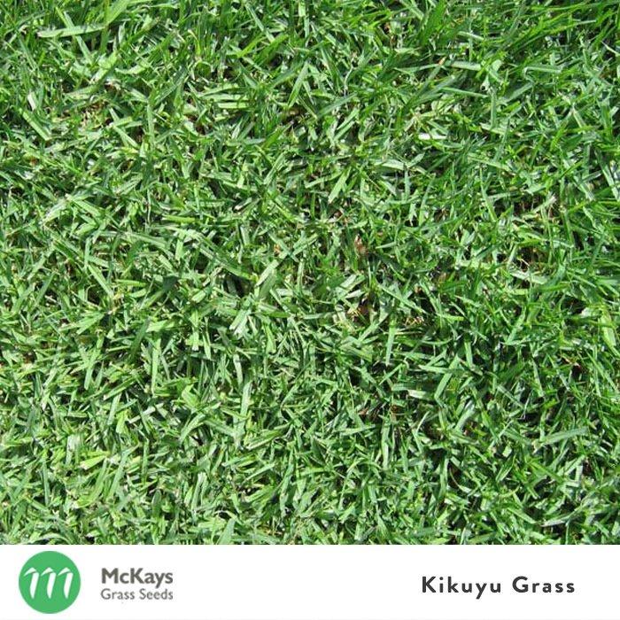 Kikuyu Grass Seed
