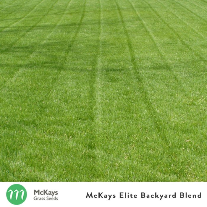 Elite Backyard Blend